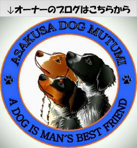 logo_asakusa_dog_mutsumi_2